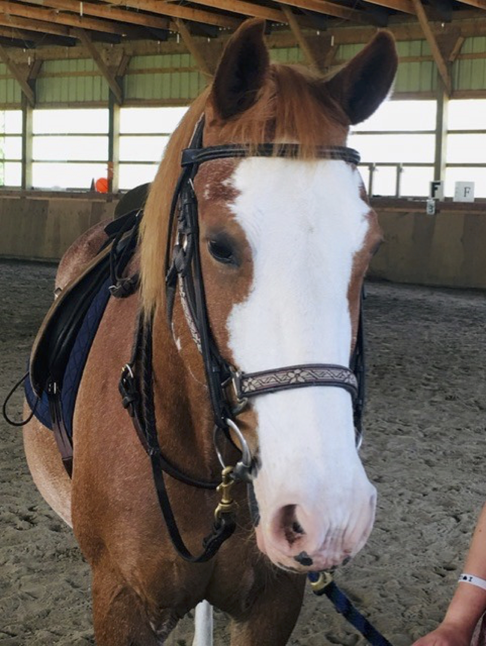 CanTRA Therapy Horse
